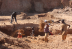 Illegal miners invade bulawayo