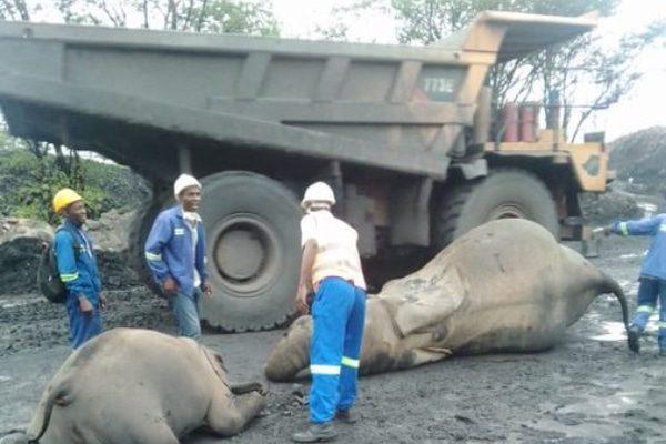 A dump truck collides with elephants in hwange Dec 2020